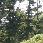 Foto Capre nel bosco di Monte Vulture